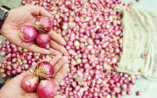 Onion price rises to Rs 60 per kg