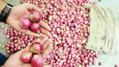 Photo of Onion prices double in a week in Hyderabad