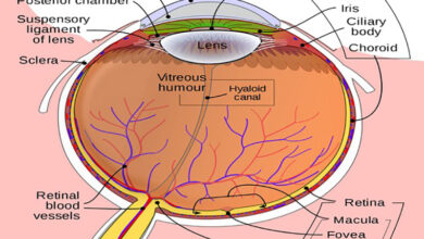Photo of Optic nerve stimulation to offer a visual aid to blind: study
