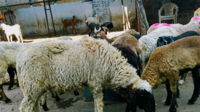 Photo of 'Unprecedented times': Butchers stare at massive loss this Eid
