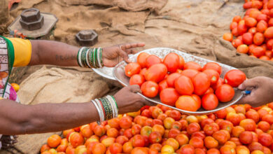 Photo of Hyderabad: Tomato prices ease as import resumes
