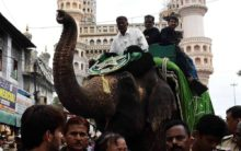 Elephant rehearses for Moharram procession