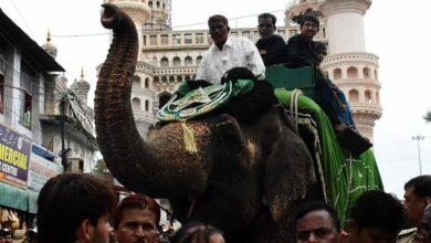 Photo of Elephant rehearses for Moharram procession