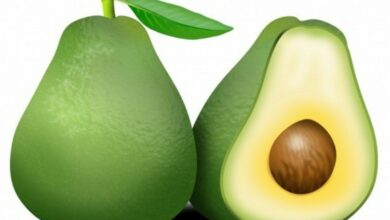 Photo of Avocado changes diet pattern in obese people: Study