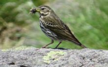 Birds eat 400 to 500 million tonnes of insects annually: Study