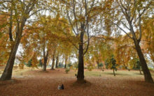 Kashmir's mesmerising autumn arrives without any tourists