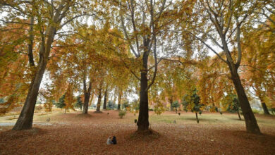 Autumn arrives in Kashmir without any tourists
