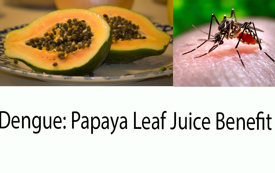 Papaya-Dengue-Free-Use
