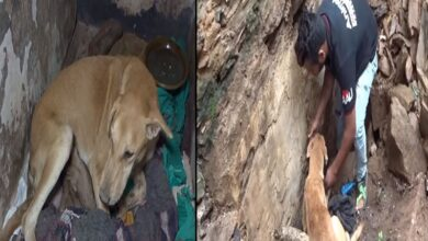 Photo of Incessant cries for help from mother dog lead to saving puppies