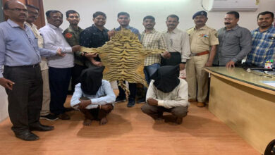 Photo of Tiger skin worth Rs 5 lakh seized in Pune, 2 held