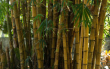 Here's how Bamboo is bringing development in Jharkhand