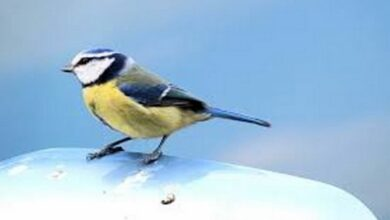 Photo of Common insecticides threaten survival of wild birds: Study