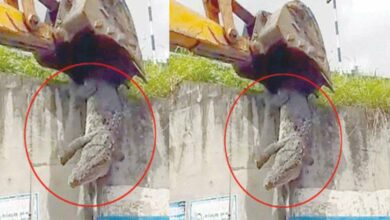 Photo of Fact Check: Viral video of a crocodile not from Secunderabad