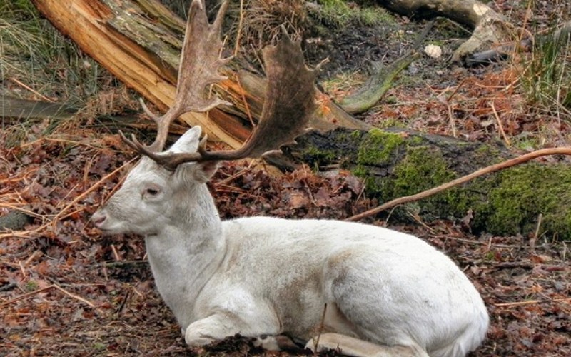 Rare deer found alive after extinction!