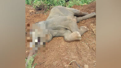 Photo of 10-yr-old male elephant dies at Nandankanan Zoological Park
