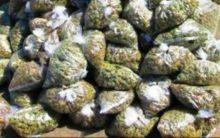 Hyderabad: Ganja smuggling, one held