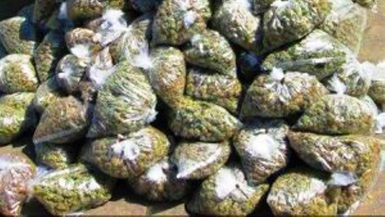 Around 1000 kg of ganja worth Rs 1.2 cr found hidden in onions