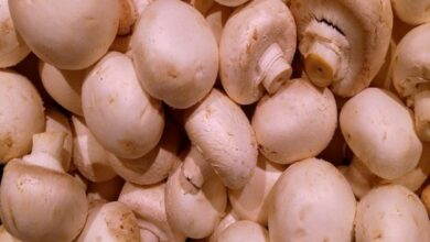 Photo of Eating mushrooms cuts prostate cancer risk: Study