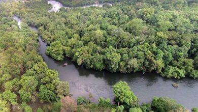 Photo of No uranium mining in Nallamala Forest, says KCR