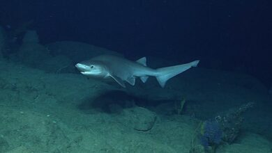 Photo of Climate change affecting shark pups development: Study