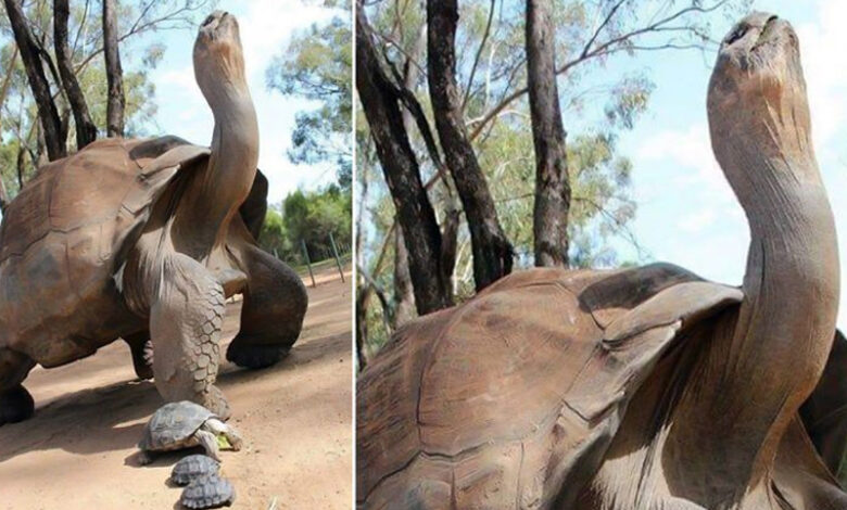 344-year-old tortoise with 'healing powers' died in Africa