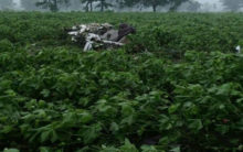 Two trainee pilots killed after aircraft crashes in Vikarabad