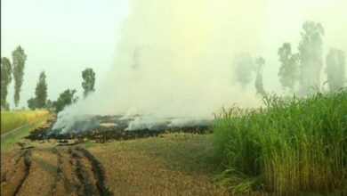 Photo of Haryana: Stubble burning continues in Fatehabad despite ban