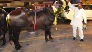 Photo of Bulls participates In Sadar Festival at Narayanguda In Hyderabad