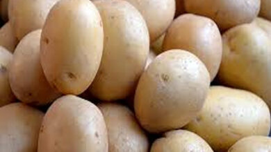 Photo of Potato effective for boosting athletic performance: Study