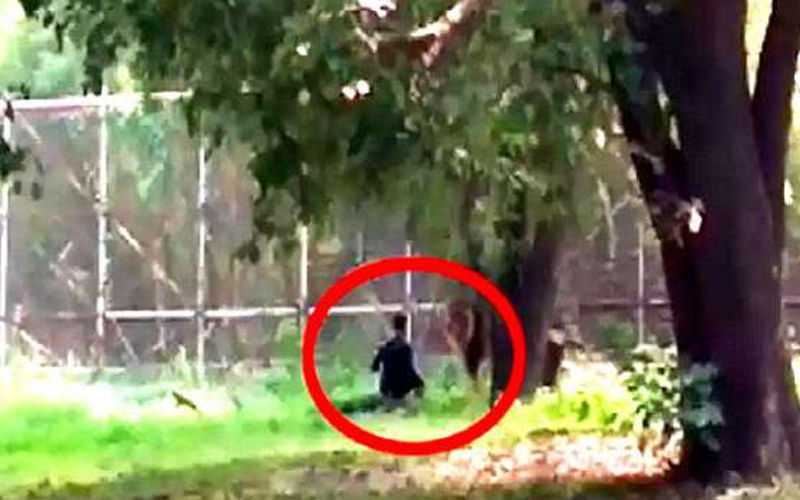Pandemonium in zoo after man jumps in lion's enclosure