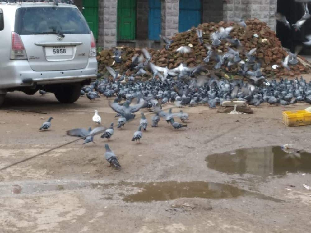 Hyderabad: 500 pigeons of Mozamjahi Market release in Srisailam