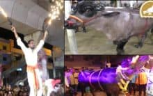 Diwali celebrations climax with best bullocks show in Hyderabad