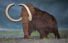 Wooly mammoths took last breath on a remote island