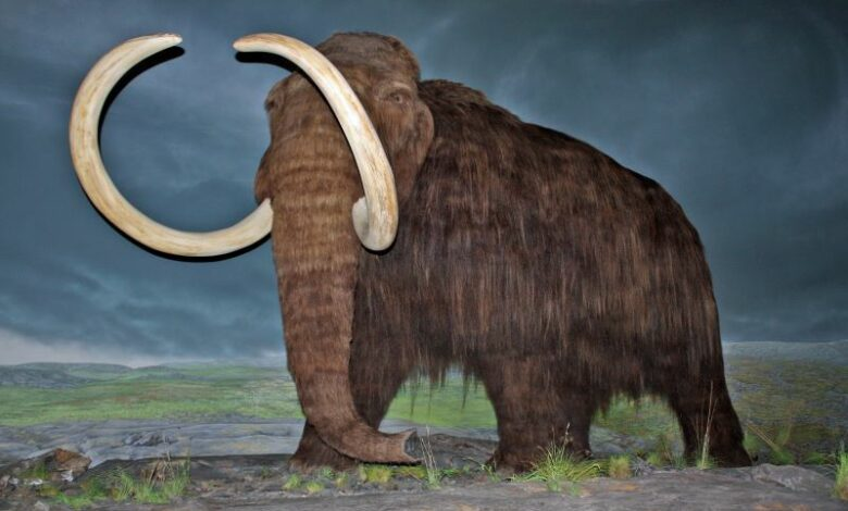 Wooly mammoths took last breath on a remote island