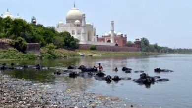 Photo of Stink is still the flavour of Yamuna in Taj city