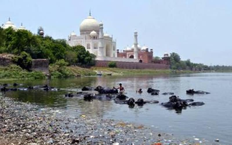 Stink is still the flavour of Yamuna in Taj city