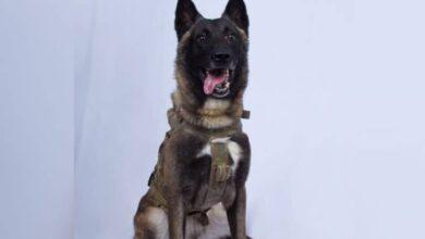 Trump releases photo of military dog injured in al-Baghdadi raid