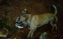 Woman attacked dog in inebriate state