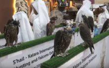 Spanish falcons feed Arab passion