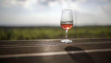 Photo of Kerala to produce fruit-based wine,low alcohol liquor
