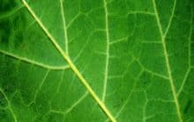 Artificial leaf successfully produces clean gas!