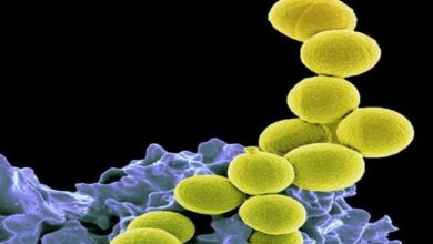 Photo of Study discovers enzyme that may prevent streptococci infection