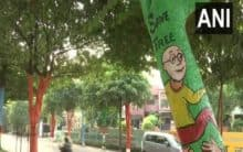Trees painted with colours as part of beautification drive