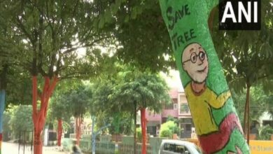 Photo of Trees painted with colours as part of beautification drive