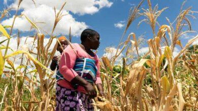 Photo of Zimbabwe facing 'man-made' starvation, UN expert warns