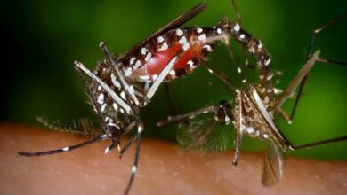 Photo of Mosquito mating sounds may lead to building quieter drones