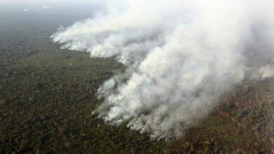 Photo of Deforestation in Brazil's Amazon highest level since 11 years