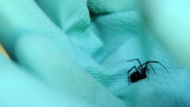 Photo of Spiders inspired researchers to create a depth sensor
