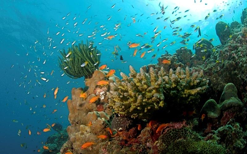 Strange disease threatens Caribbean coral reef