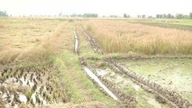 Photo of J-K: Unseasonal rain causes 35-40 pc crop loss in Samba district